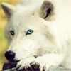 werewolf_girl userpic