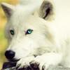 werewolf_girl userpic