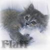 tanithryudo: Fluff