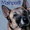 malnpudl userpic