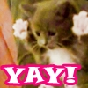 geekchick1013: Kitteh YAY!