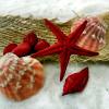 frantic_quest: non-fandom seashells