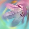 beautyfulevil userpic