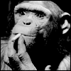 chimpanzee View all userpics