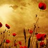 fleur_de View all userpics