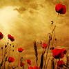 fleur_de