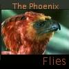phoenix_flies View all userpics