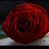esteldur userpic