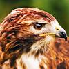 amazingbirdboy_ userpic