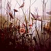 blackbirds View all userpics