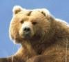 redbeargrl userpic