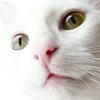 exceptonlyacat userpic
