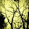 ashesremain userpic