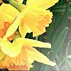 ladydark1 userpic