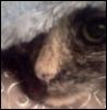dracomau userpic