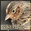 fileg userpic