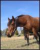 equestrian View all userpics