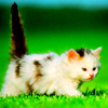 kitty_icons View all userpics