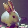 madrabbits userpic