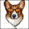 wildcorgi userpic
