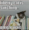 ladyofshadow: Liberry cat