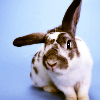 rabbitowners View all userpics