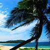 island_descant View all userpics
