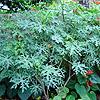leafyaffleck View all userpics