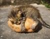 kittenfromhell userpic