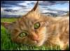 dazzlingd userpic
