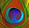 pomonasprout userpic