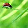 jenbug userpic