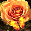 autumnroses View all userpics