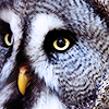 hereticowl userpic
