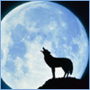 moon_music View all userpics
