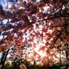 galangalang View all userpics