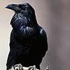 ravenstone userpic
