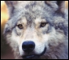 wolves_unite View all userpics