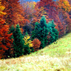 queenbarwench: autumn leaves