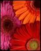 willidan userpic