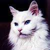 likesfish userpic