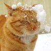 Lilith: animals-snow cat
