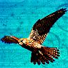kikibug13 [userpic]