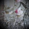 peccavi userpic