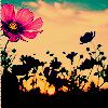 colorfilm View all userpics