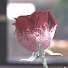flor_rvy userpic