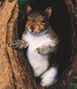 1_mad_squirrel userpic
