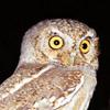 elfowls_nest userpic