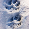 wolfprints userpic